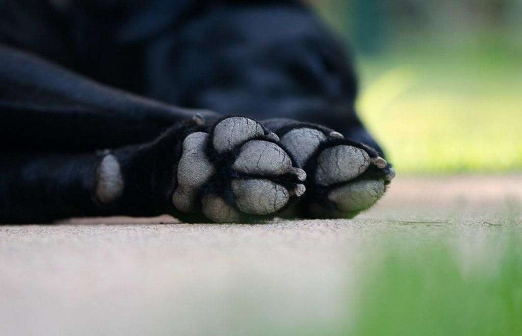 O ensaio pet é direcionado às pessoas que consideram seu animal de estimação parte da família. Realizado pela premiada fotógrafa de família Claudia Ruiz.